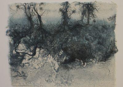 Fibres racines