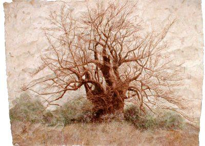 Baobab Piet (coll.part)