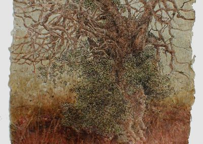 Baobab kouyaté (coll.part.)
