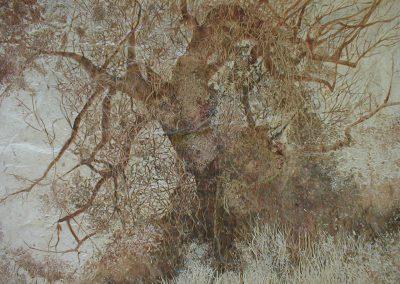 Baobab sur taillis (coll.part.)